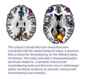 remember-brain-connections