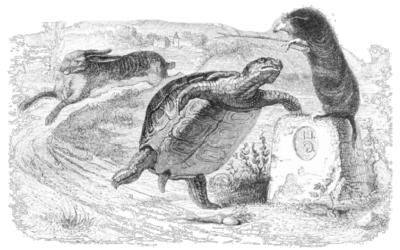 Guiding and Teaching Tortoises and Hares [Premium]